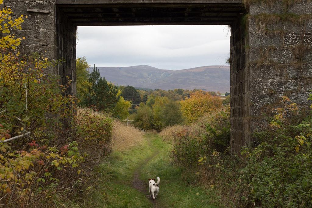 ruska, Nethy Bridge, Skotlanti