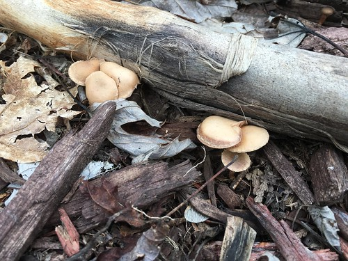 Backyard Mushrooms