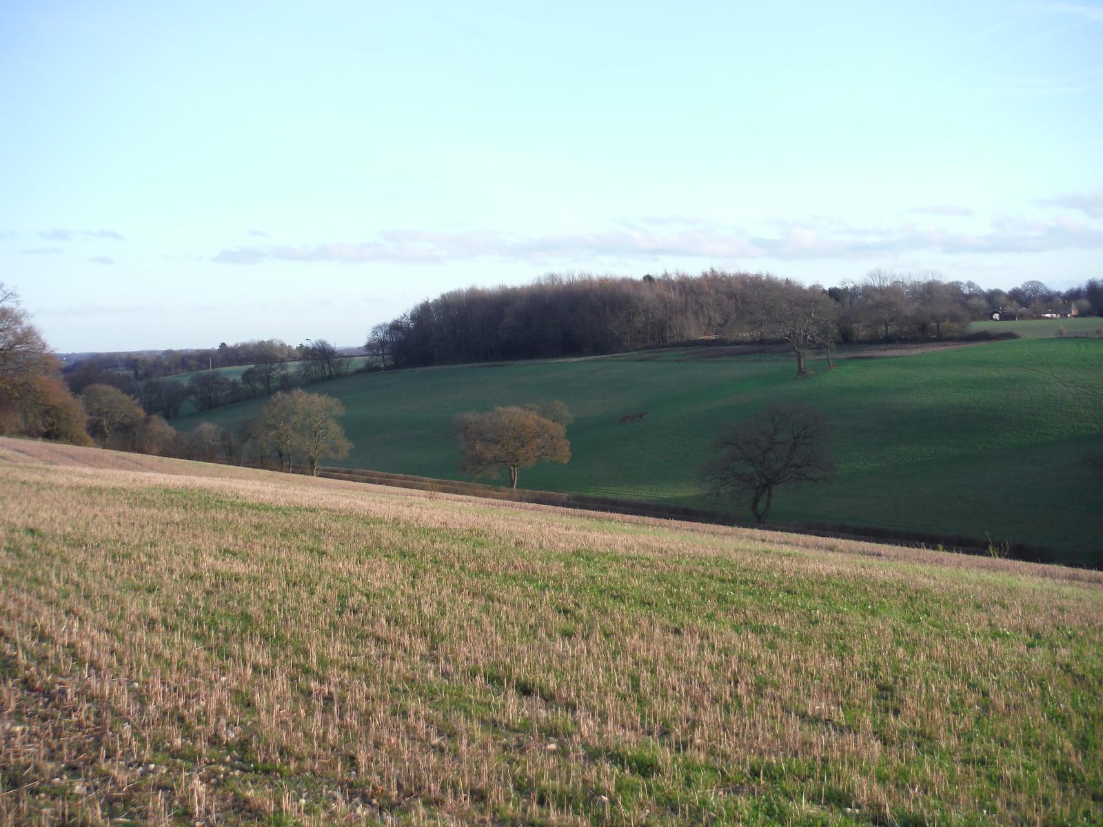 Herberts Hole, towards Chesham SWC Walk 140a Wendover to Great Missenden