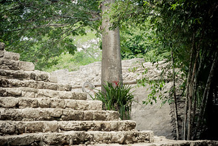 Image de Cobá. coba koba mayan mexico quintanaroo ancient archaeology background civilization detail edifice grand heat jungle lush park ruins stairs steps structure summer sun sunny tourism tropical yucatan mx