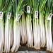Small photo of Leeks (Allium ampeloprasum)