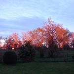 Photos des lecteurs | Crépuscule sur l'airial de chênes au domaine de Moré, Morcenx