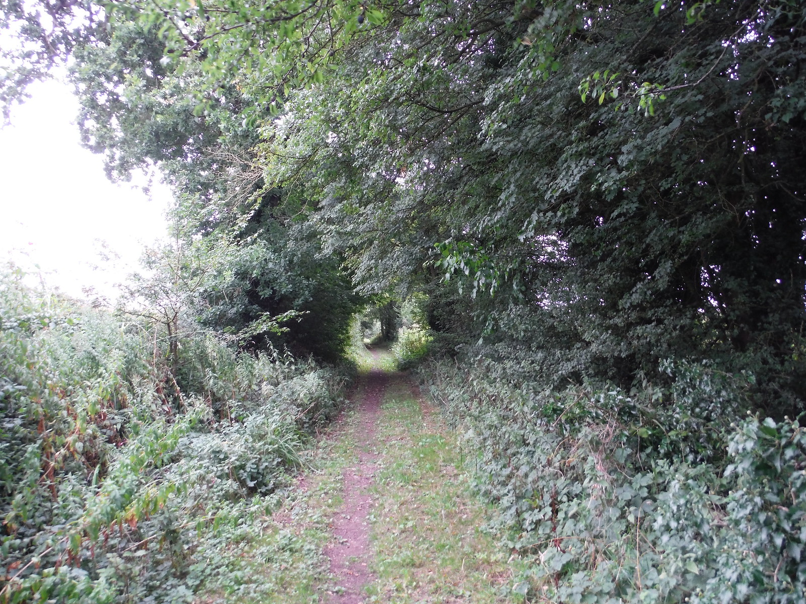 Chandler's Lane SWC Walk 164 Roydon to Sawbridgeworth via Henry Moore Foundation