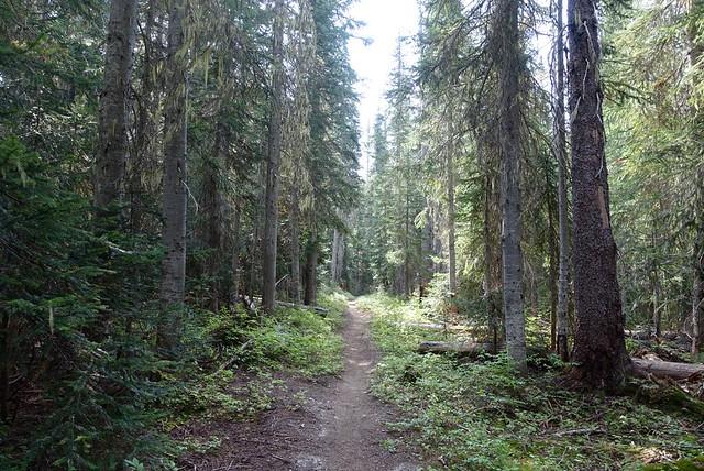 PCT near Holman Pass