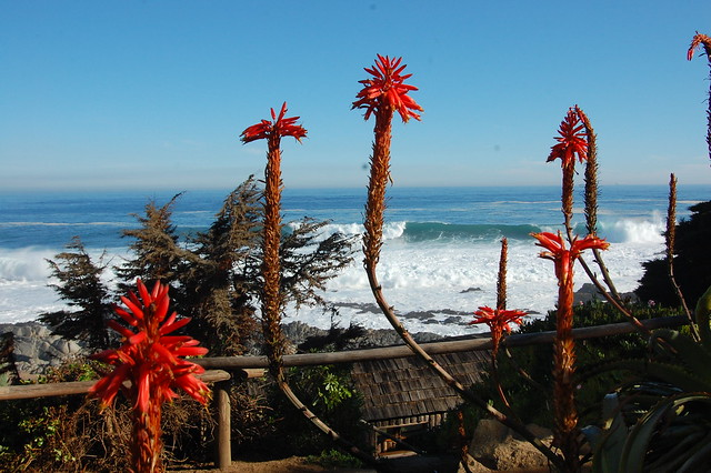 Views from Isla Negra, Chile