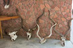 skulls and horns