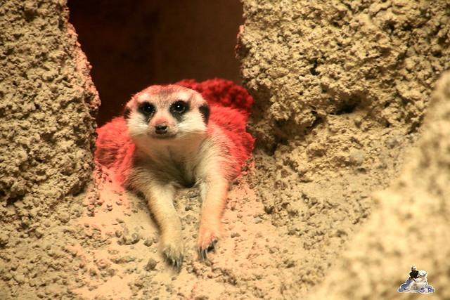 Zoo Berlin 18.09.2015   078