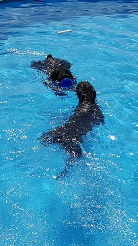 SnowAndPhinnSwimming