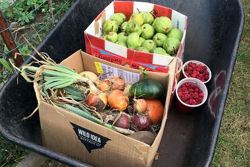 harvest IMG_2822