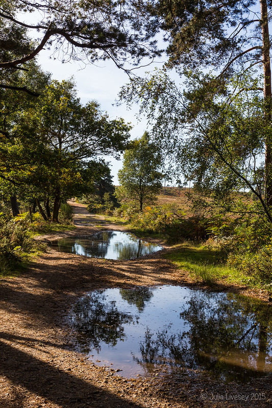 Puddles on the old Coach Road