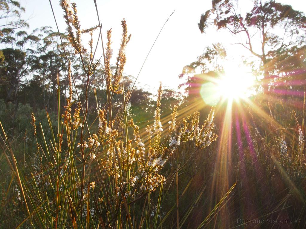 Morning sun_c