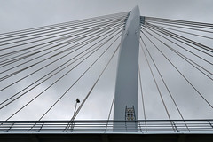 Cables of the Prince Claus Bridge