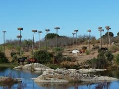 Natural Monument Los Barruecos aneb Wolf Vostell v žulovém království čápů