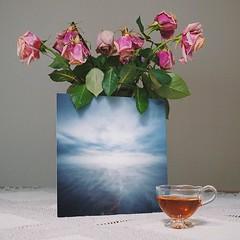 some things last longer than fresh-cut flowers #roses #faded #print #ocean #beauty #tea #pinhole  #natiurmortas #art #gėlės #stilllife #objects #oceanpinhole #remains #assam #натюрморт #цветы #VSCOcam