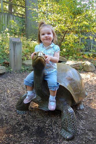 Turtle (Statue) Ride