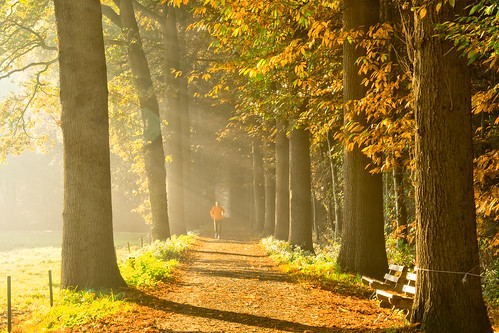 A jogger in the wood