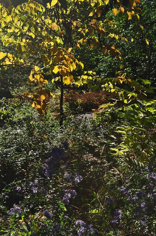 Peirce's Woods (4)