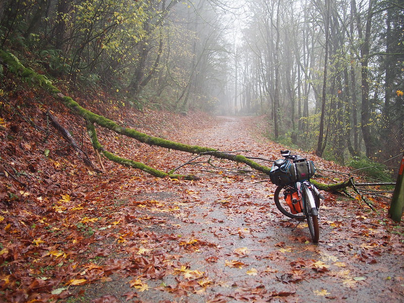Snoqualmie Valley Trail: Downed Tree #2, the Other Way: This one is between Fall City and Carnation, and was easy to get around.