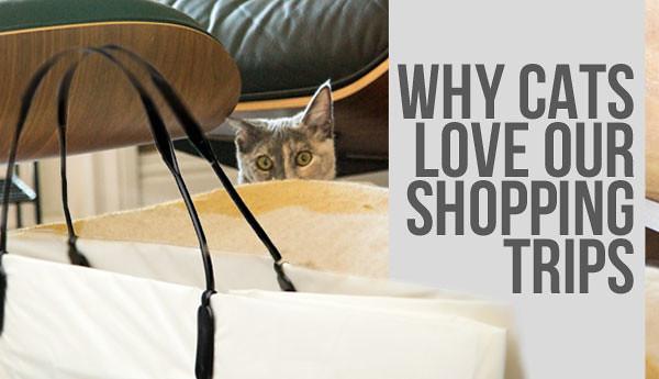cats-love-shopping-trips-2