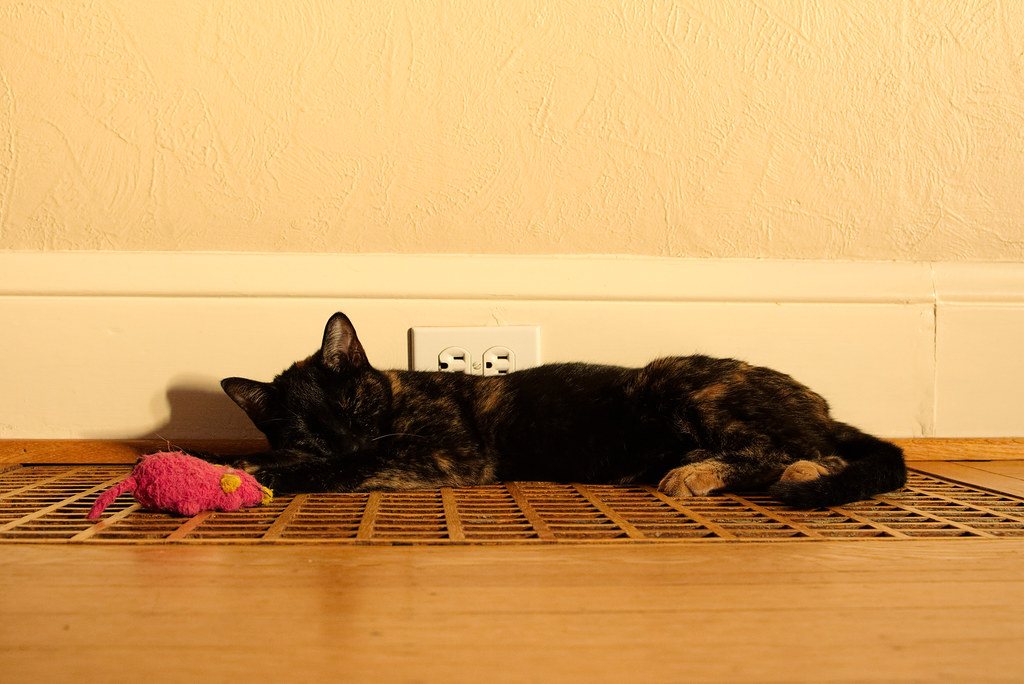 Our cat Trixie sleeps above a heating vent