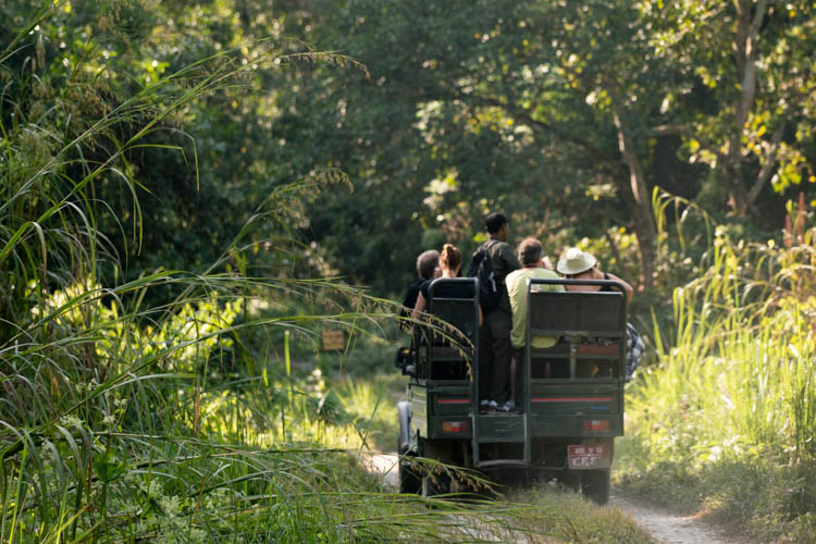 Is It Worth it To Visit Chitwan National Park?