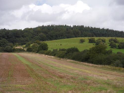 Knoyle Corner forested hilltop