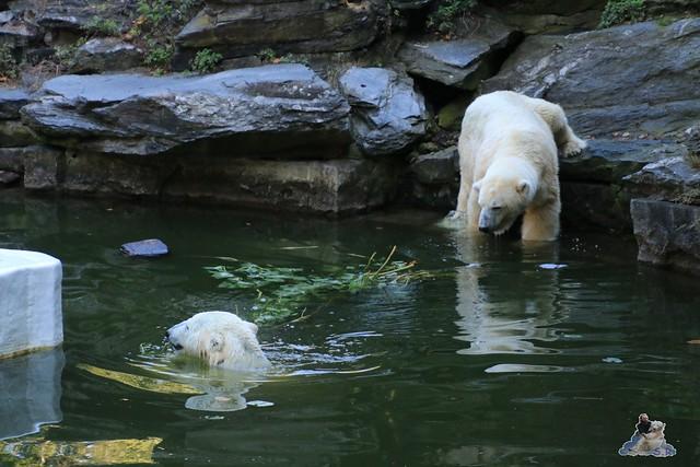 Tierpark Berlin 30.08.2015  077