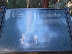 General Sherman Tree Marker