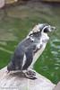 Penguin by GeorgiaDawson