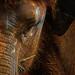 Asian Elephant Portrait by David Gn Photography
