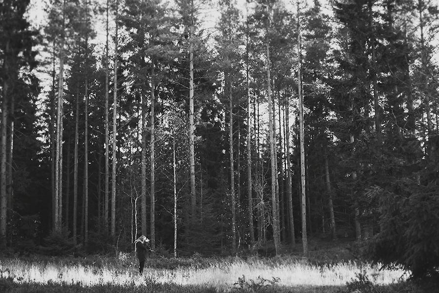 Mullsjö skogen