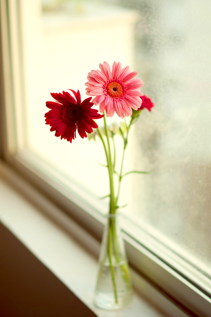Day 280.365 - Flowers by the window