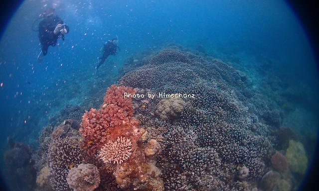 サンゴがぎっしりでした!