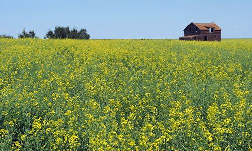 house canada field entropy sunny olympus clear prairie saskatchewan canola omd em5