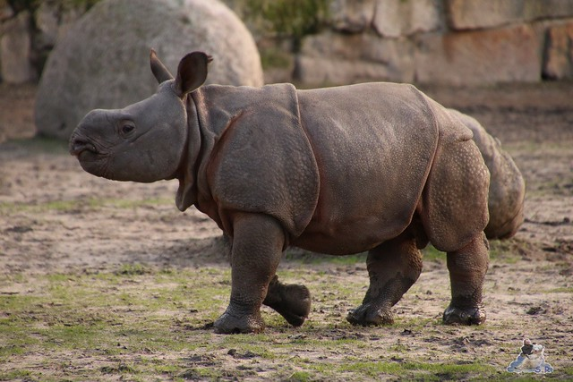 Tierpark Berlin 25.12.2051   119