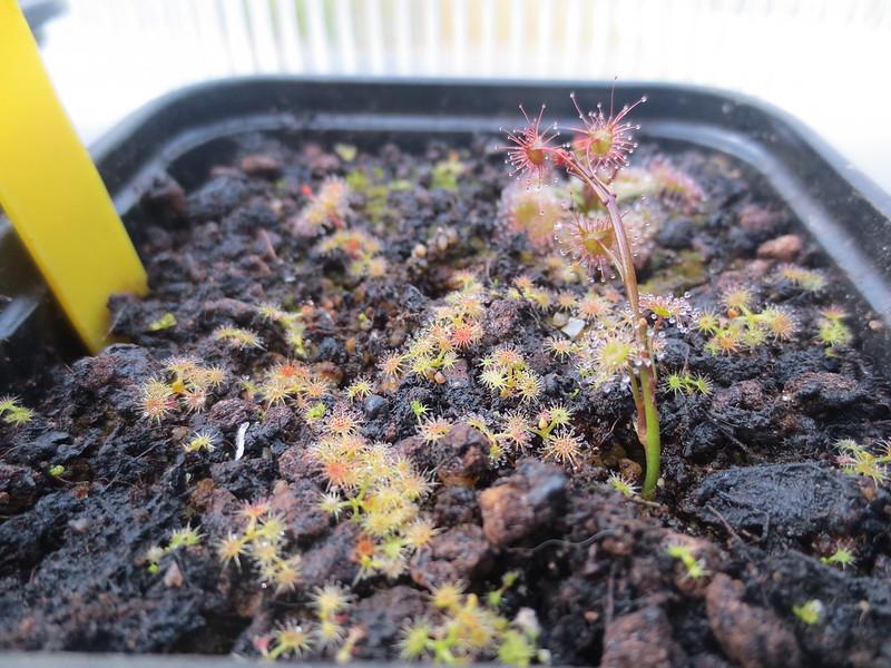 Plantas.werds.2012-2013 - Página 8 23639680289_0330cd148e_c