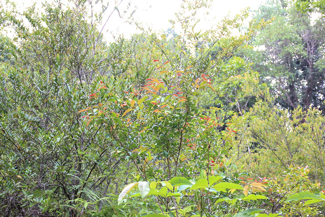 beautiful leaves at Jerangkang waterfalls