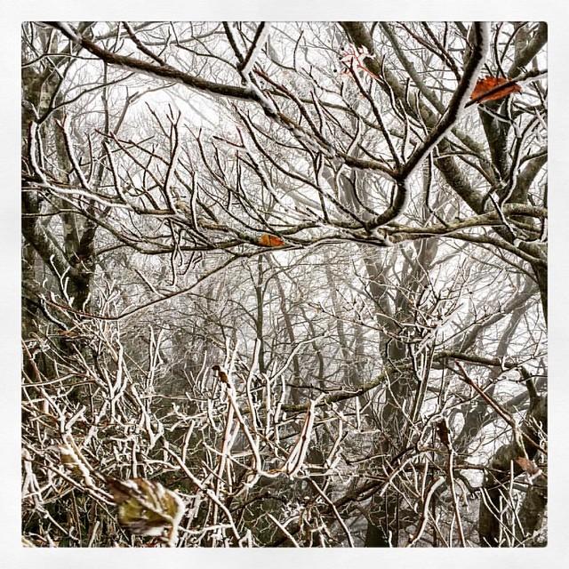 Photo:「霧氷」 紅葉は9月だった。 #ufoライン #ドライブ By kaidouminato