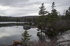 Hobsons Lake Trail, Kearney Lake Trail System