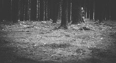 Forest Psycho