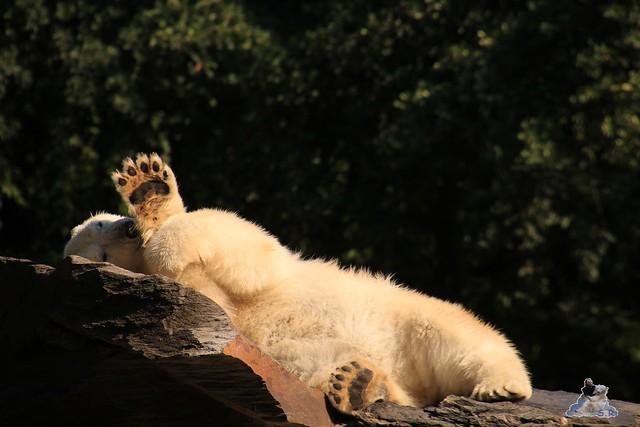 Tierpark Berlin 23.08.2015  020