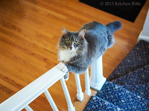 Kitty Riffs slides down the bannister