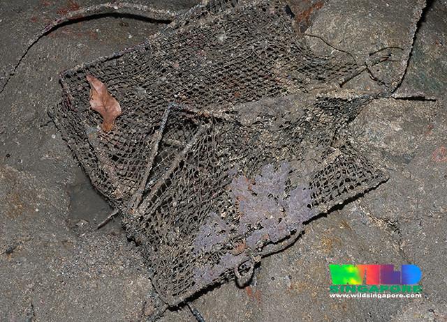 Fish trap at Changi