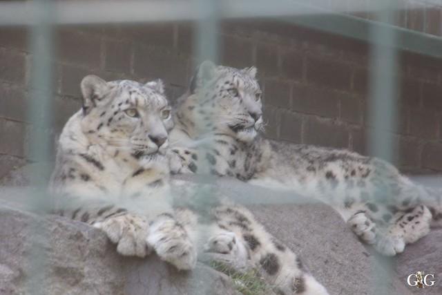 Sonntags-Besuch im Tierpark Friedrichsfelde 04.10.201543