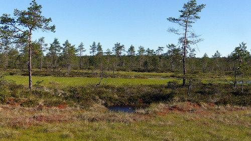 summer finland geotagged july fin bog 2015 kankaanpää satakunta 201507 korvaluoma 20150701 geo:lat=6194800328 geo:lon=2249678965 järvikeidas