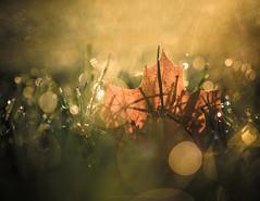 Morning Dew // 08 10 15