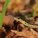 Garter snake by shutterguy59