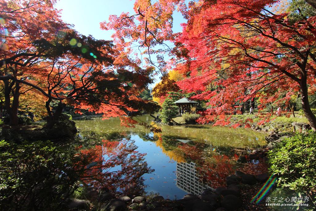 東京賞楓-日比谷公園32