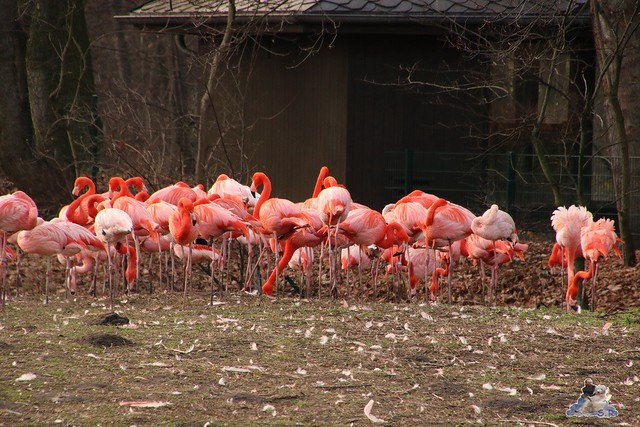 Tierpark Berlin 25.12.2051   114