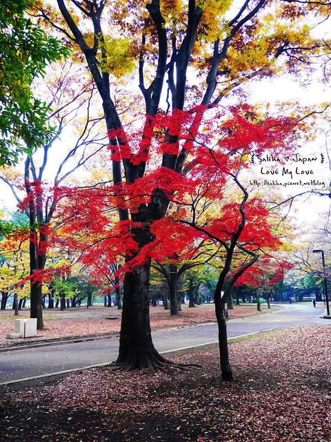 日本東京景點澀谷區代代木公園賞楓葉 (15)